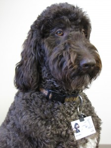 Health Care, Therapy Pet